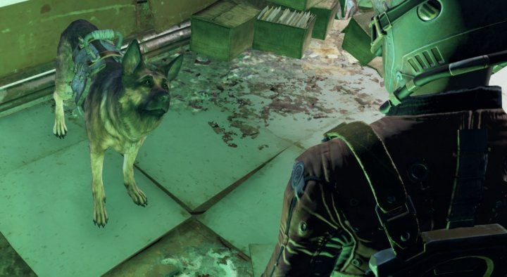 Command Dogmeat to search for loot in Fallout 4