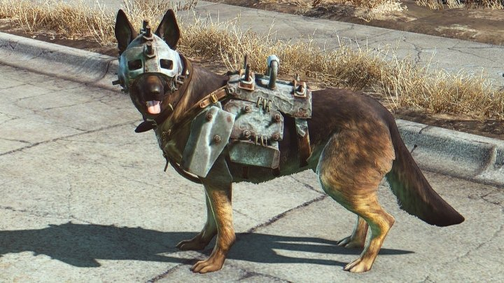 Dogmeat in Dog Armor with a Collar